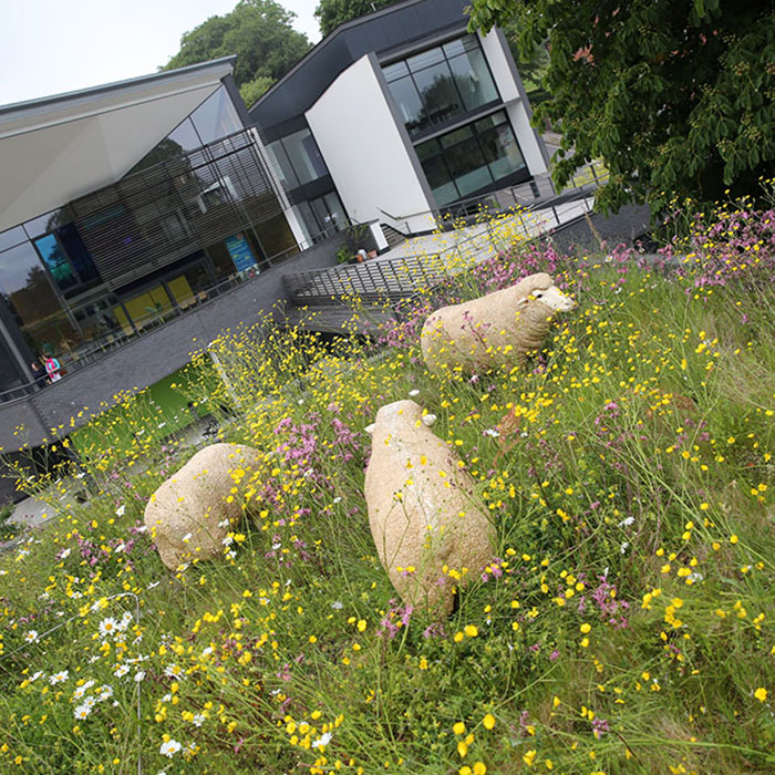 Model sheep sat upon the University of Winchester Stripe Building biodiverse roof